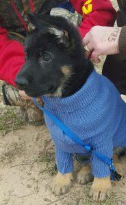 puppypic2